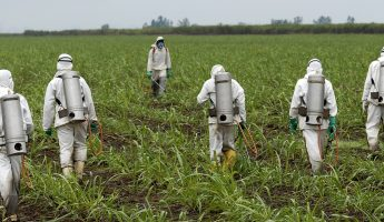 Dangers of Monsanto's RoundUp